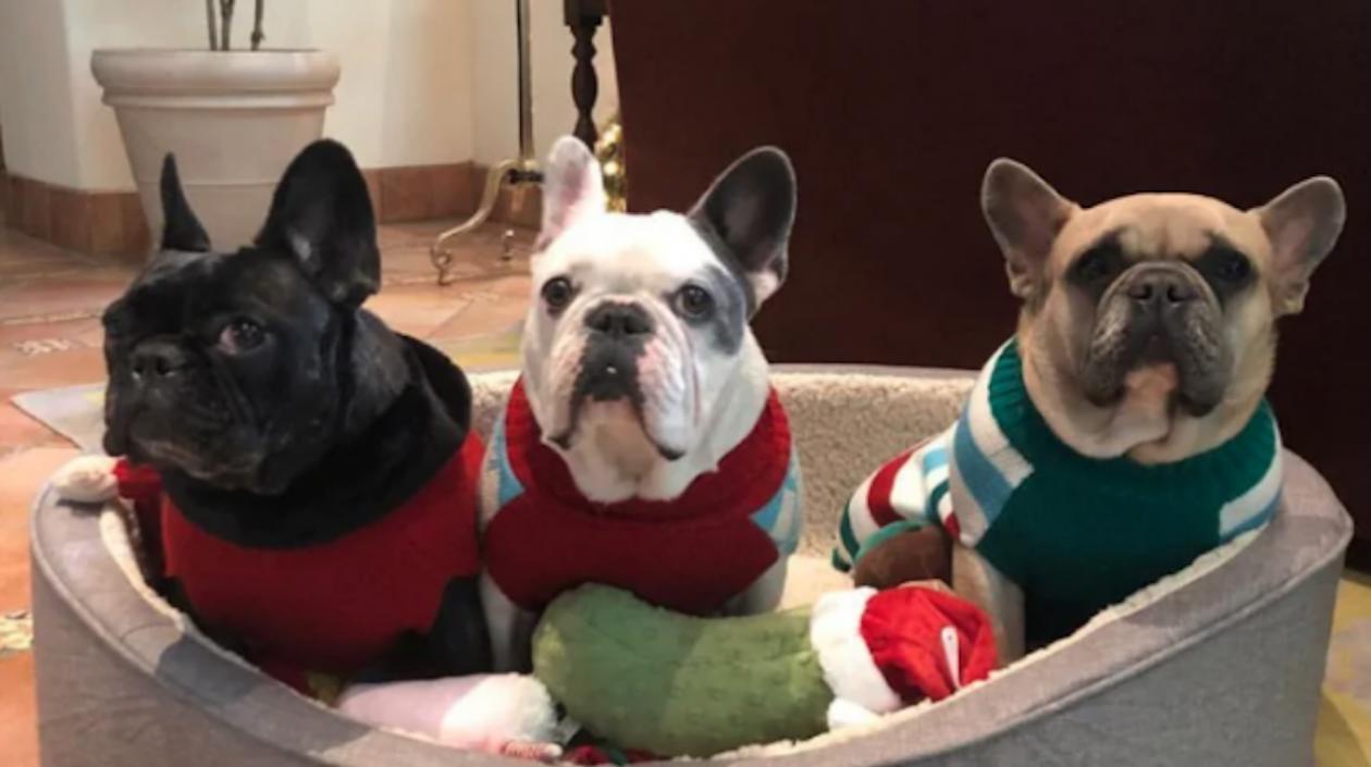 Lady Gaga recupera ilesos a los dos perros que le habían robado   Zona Cero
