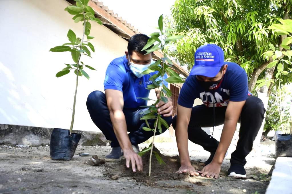 Plantación de los árboles.